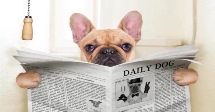 cane al bagno con giornale