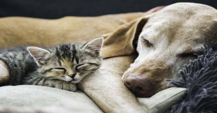 cane dorme con gatto