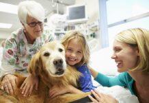 cane per la caneterapia