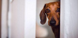 cane dietro la porta