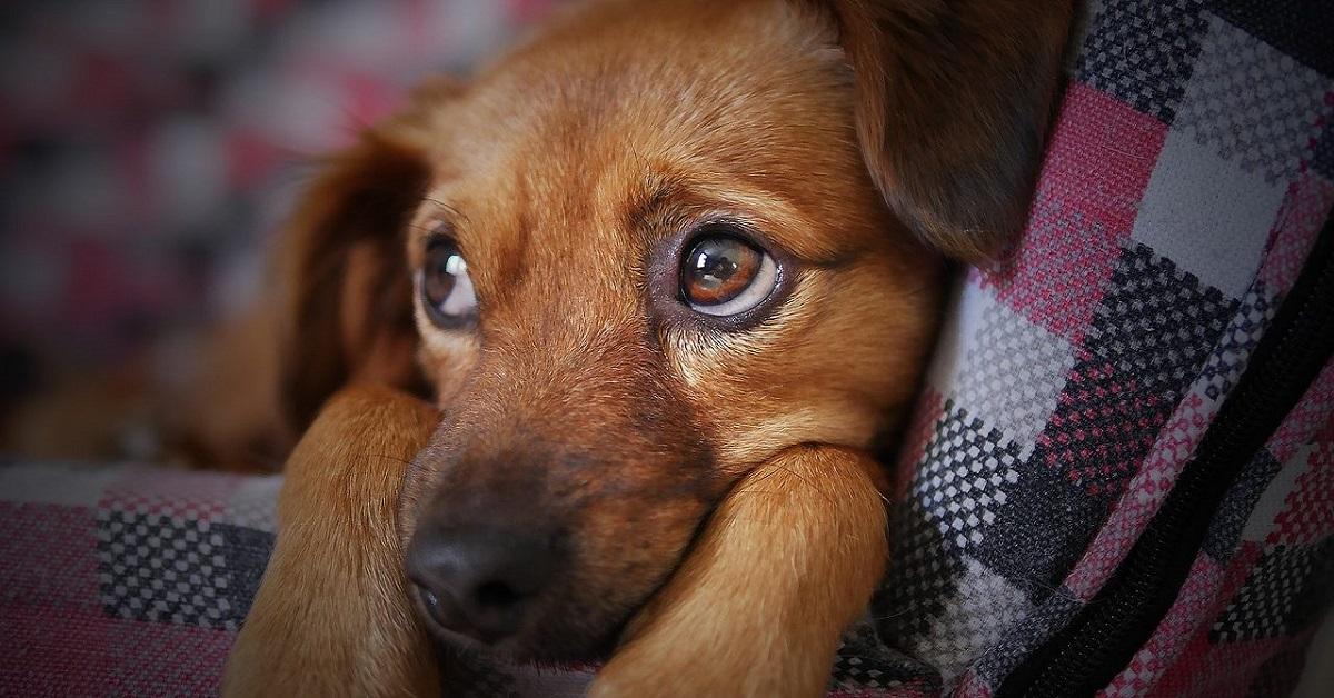 cane intimorito
