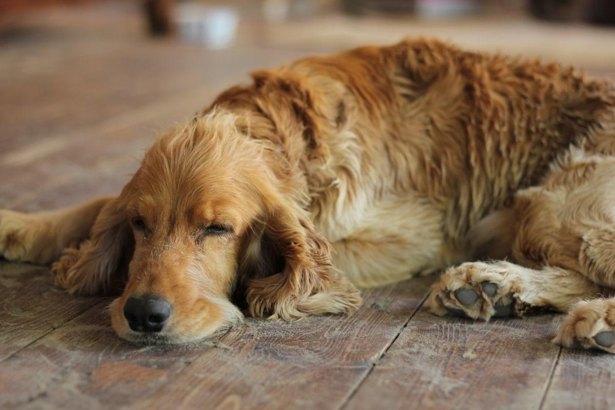 cane abbattuto e triste