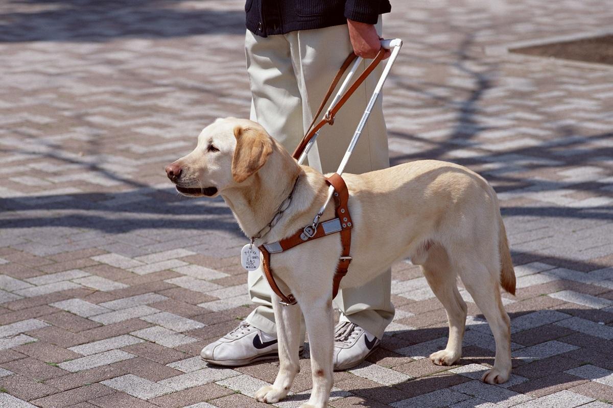 cane guida per non vedenti