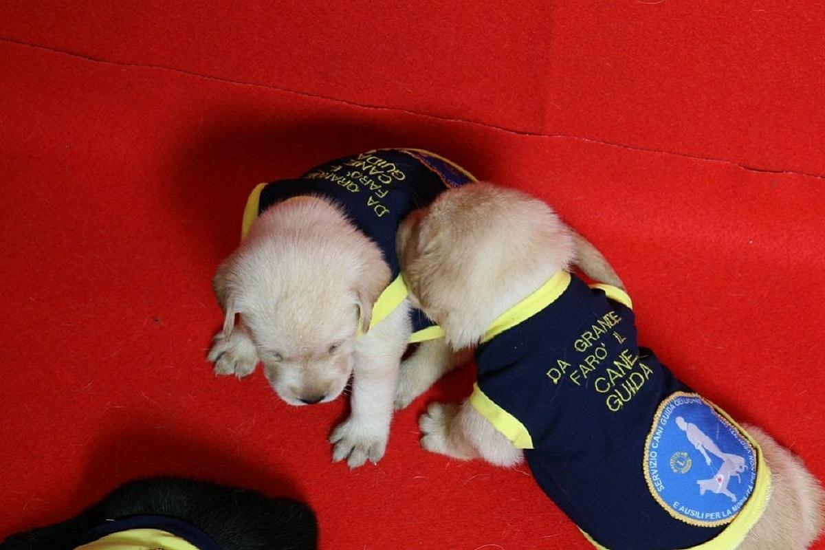 Come viene addestrato un cane per ciechi? Ecco tutto ciò che deve imparare