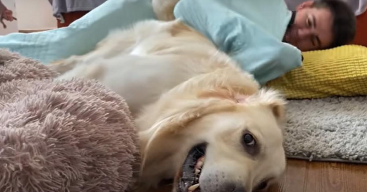 Ecco cosa fa il cucciolo di Golden Retriever Bailey quando il suo padrone dorme (VIDEO)