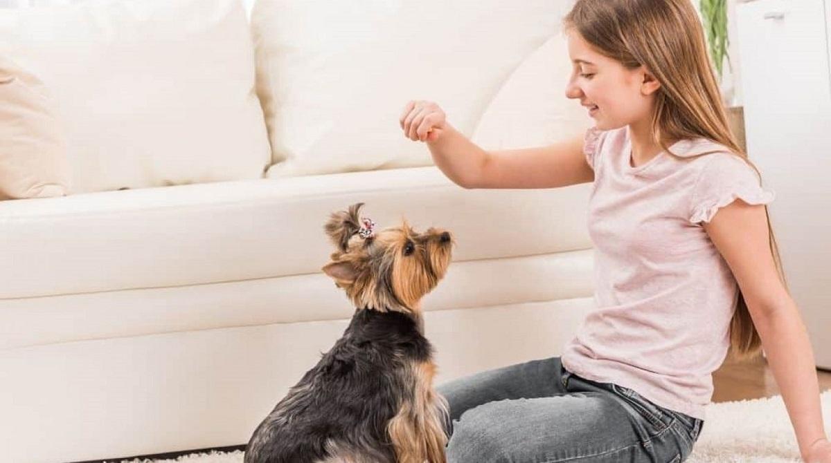 cagnolino gioca con una bambina