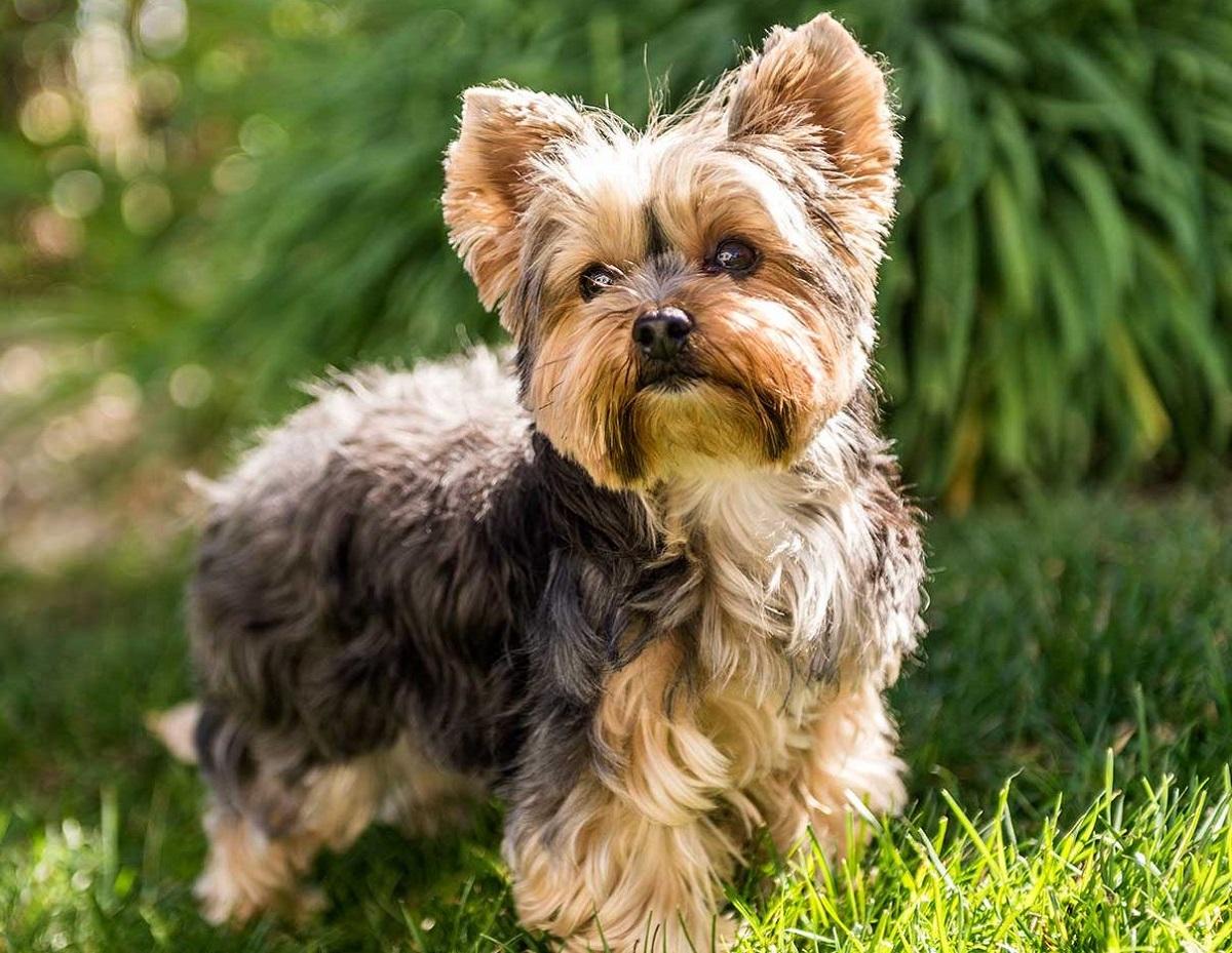 cagnolino sull'erba