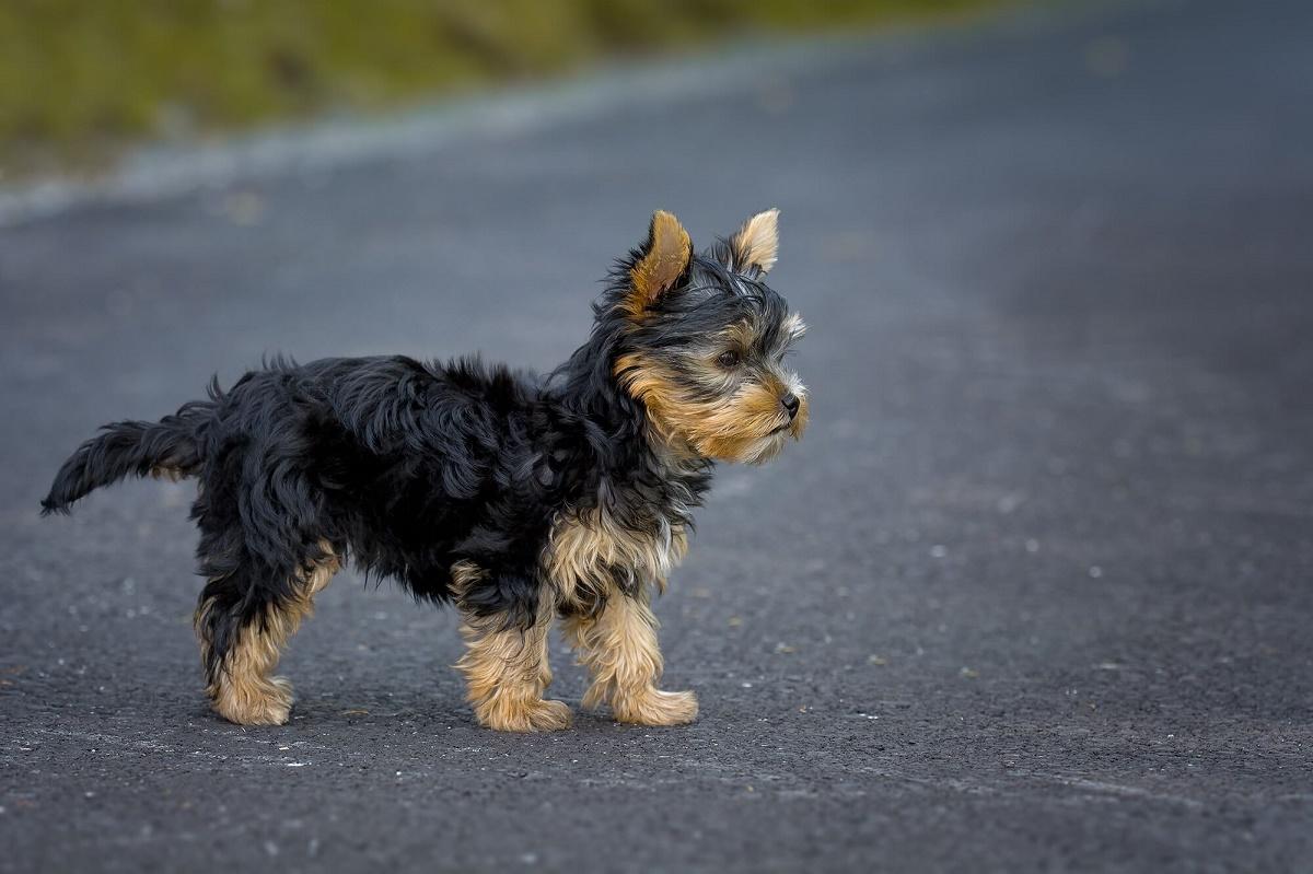 cane fermo per strada