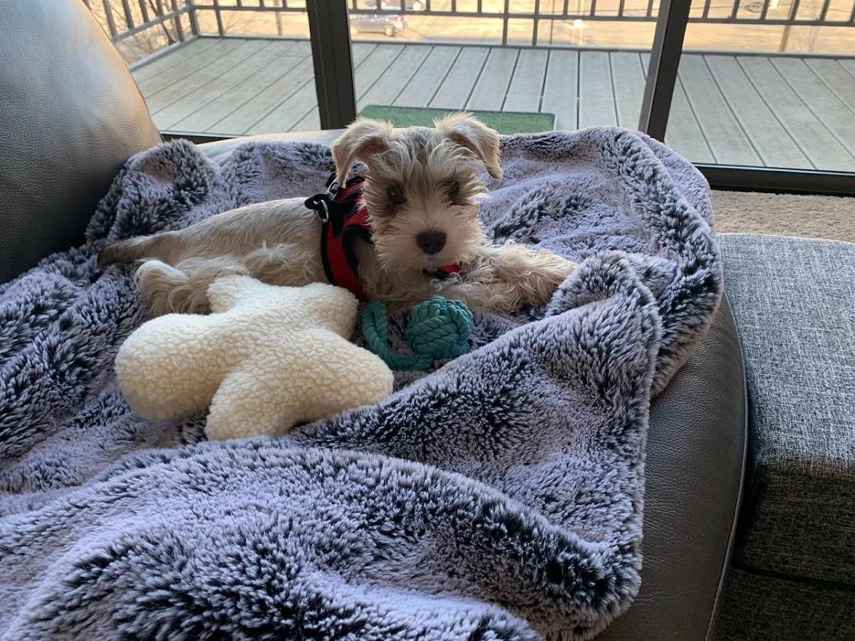 cucciolo di cane sul divano