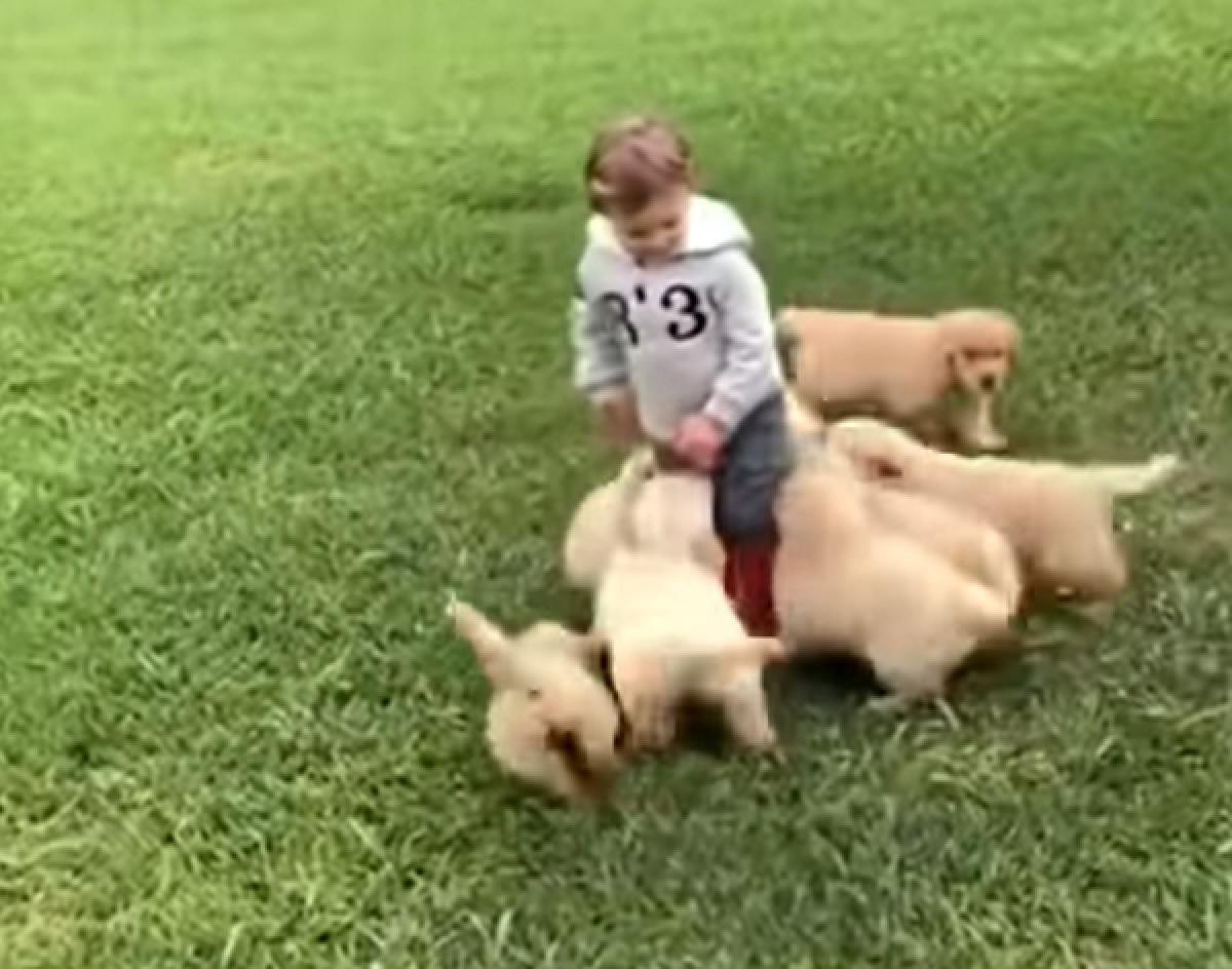 cuccioli golden bimbo fuga