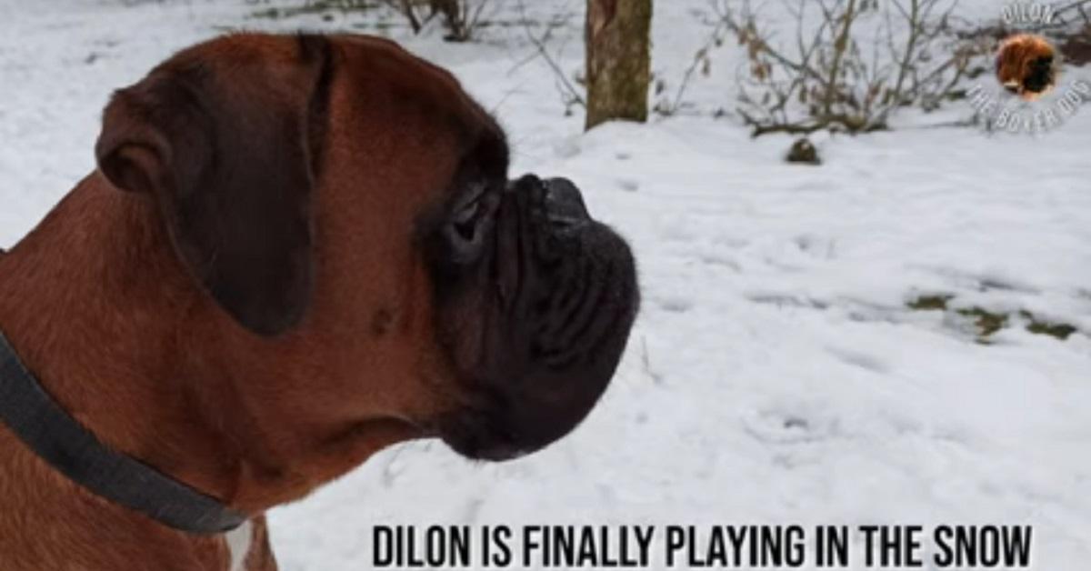 cucciolo di Boxer si diverte sulla neve