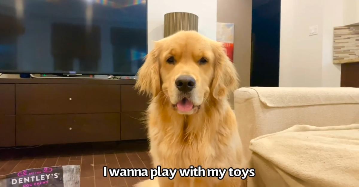 Un cucciolo di Golden Retriever festeggia il compleanno in modo speciale (VIDEO)