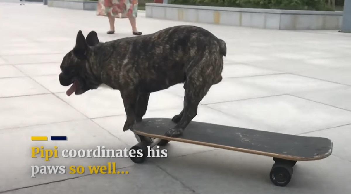 cagnolino skate abile