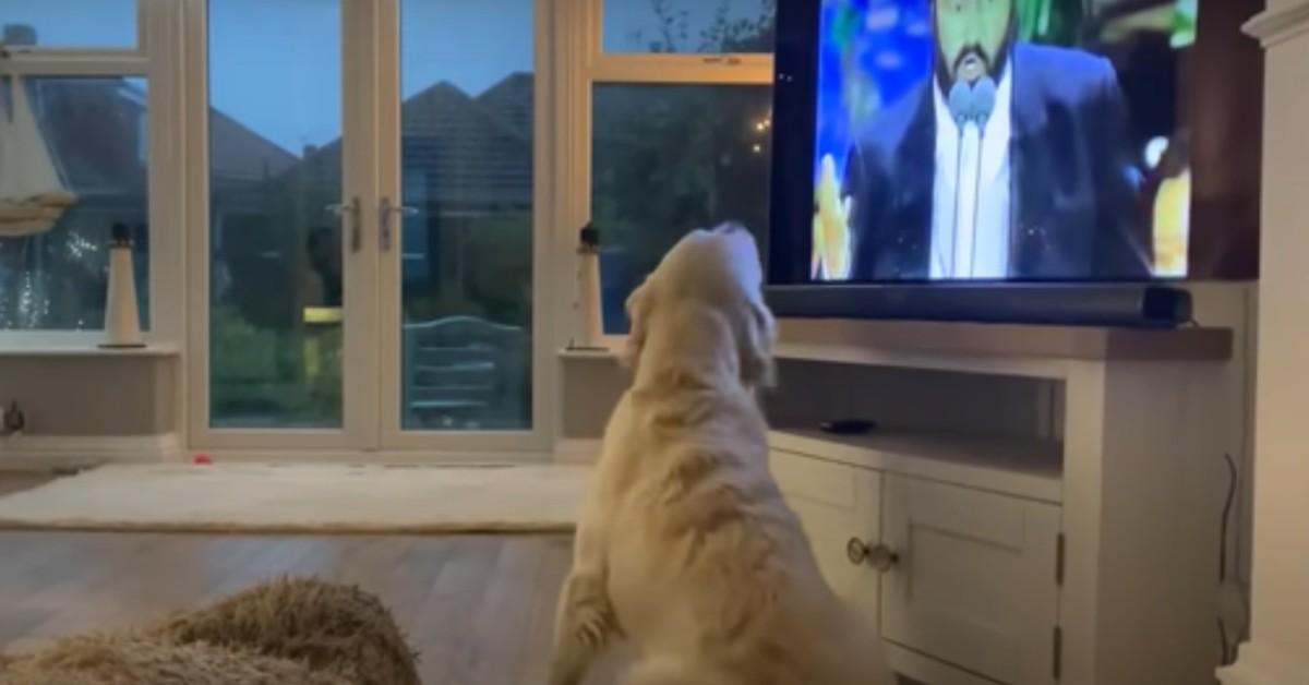 Il cucciolo di cane Hugo canta con la voce del tenore Pavarotti (VIDEO)