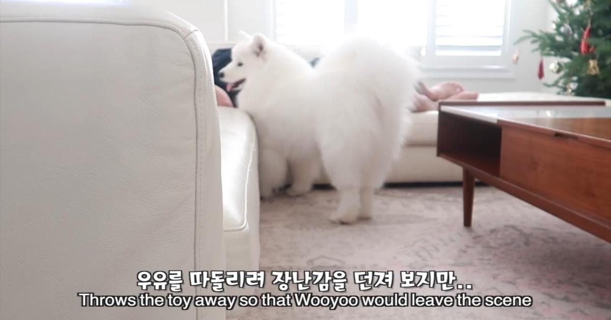 Un cucciolo di cane disturba il padrone che poi si prende la sua vendetta (VIDEO)