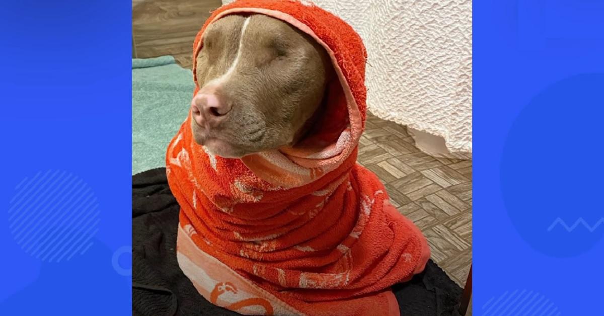cucciolo di cane senza occhi amatissimo dalla sua famiglia