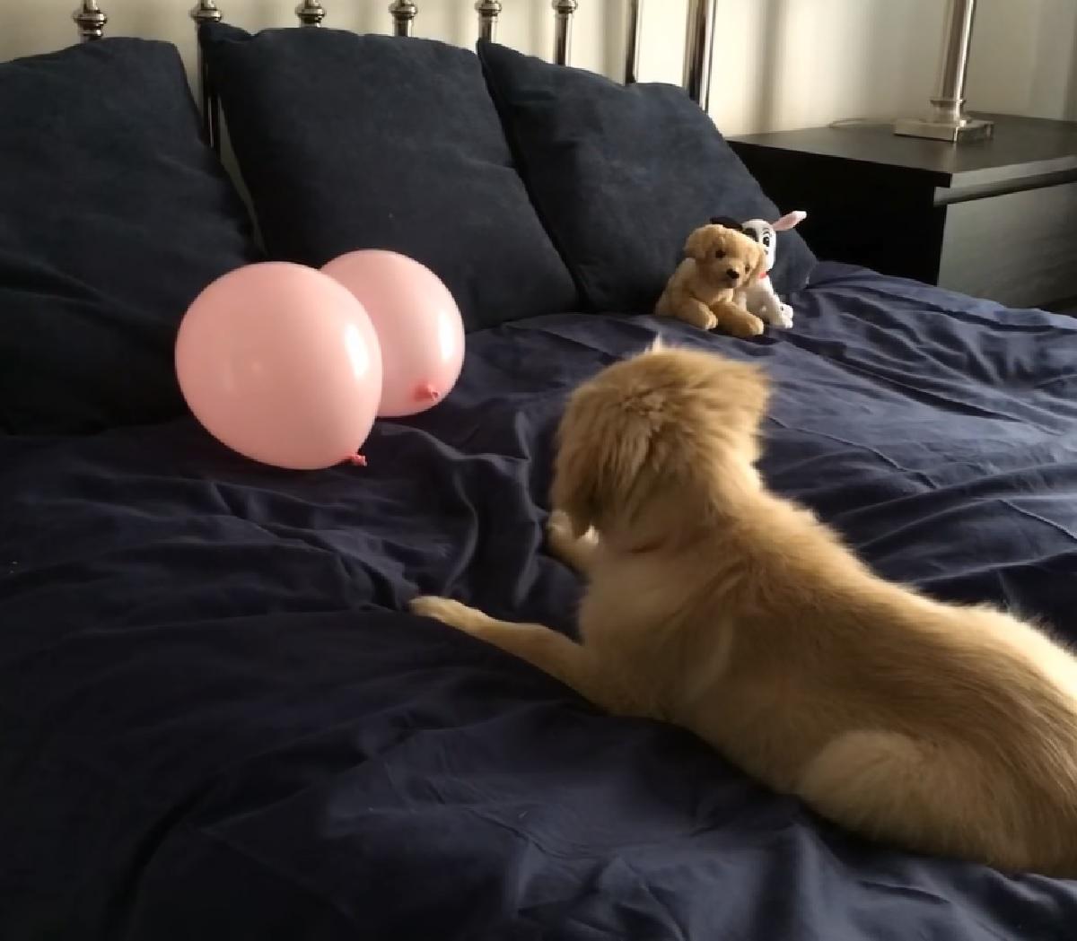 cucciolo glee palloncini letto