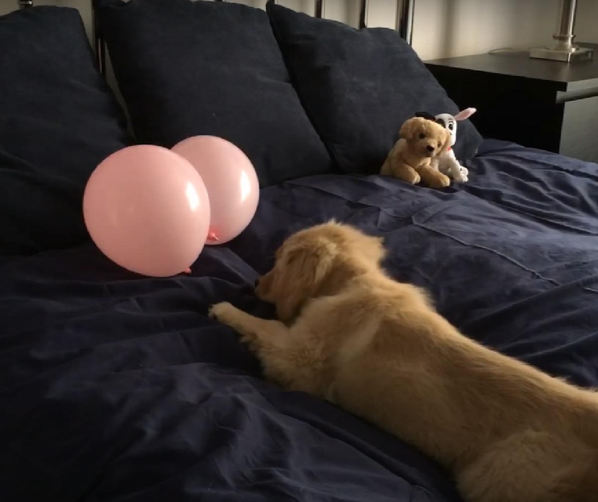 glee palloncini sinonimo curiosità