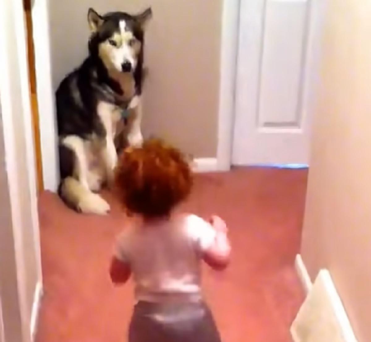 cucciolo husky in fondo corridoio