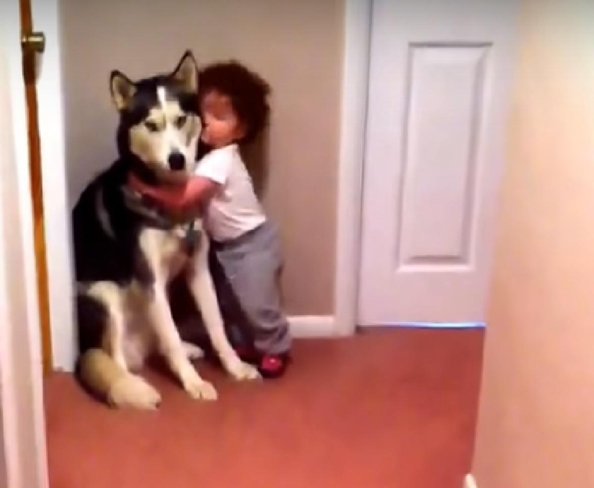 cucciolo husky abbracciato da bambina