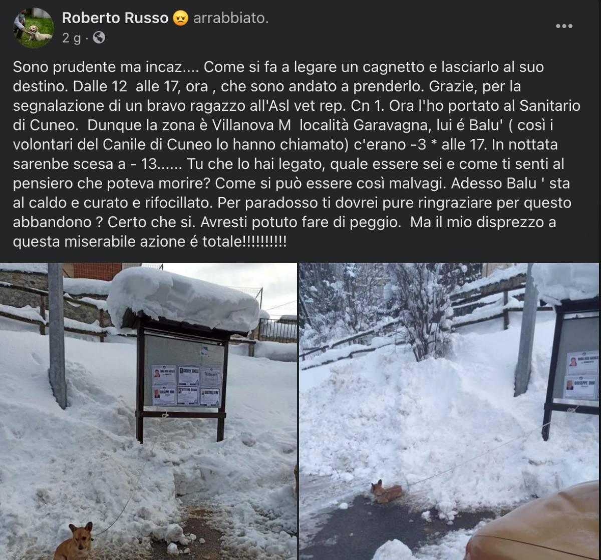 Cucciolo minuscolo simil chihuahua abbandonato legato nella neve a -3° ma un passante si è accorto di lui