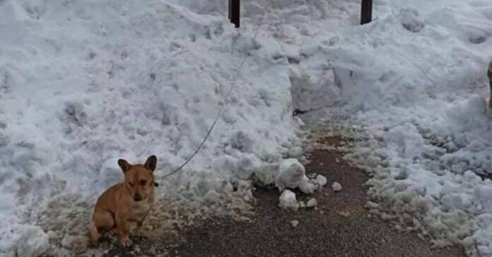 cagnolino piccolo