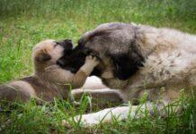 mamma e cucciolo nel prato