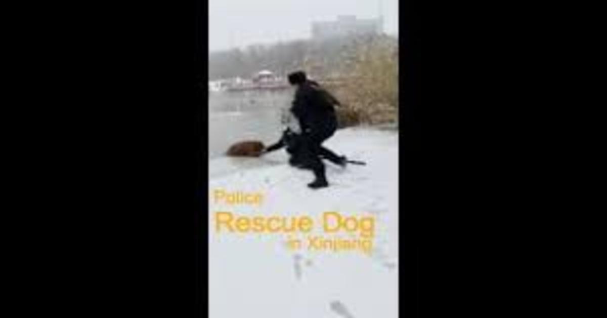 polizia salva Golden caduto nel lago