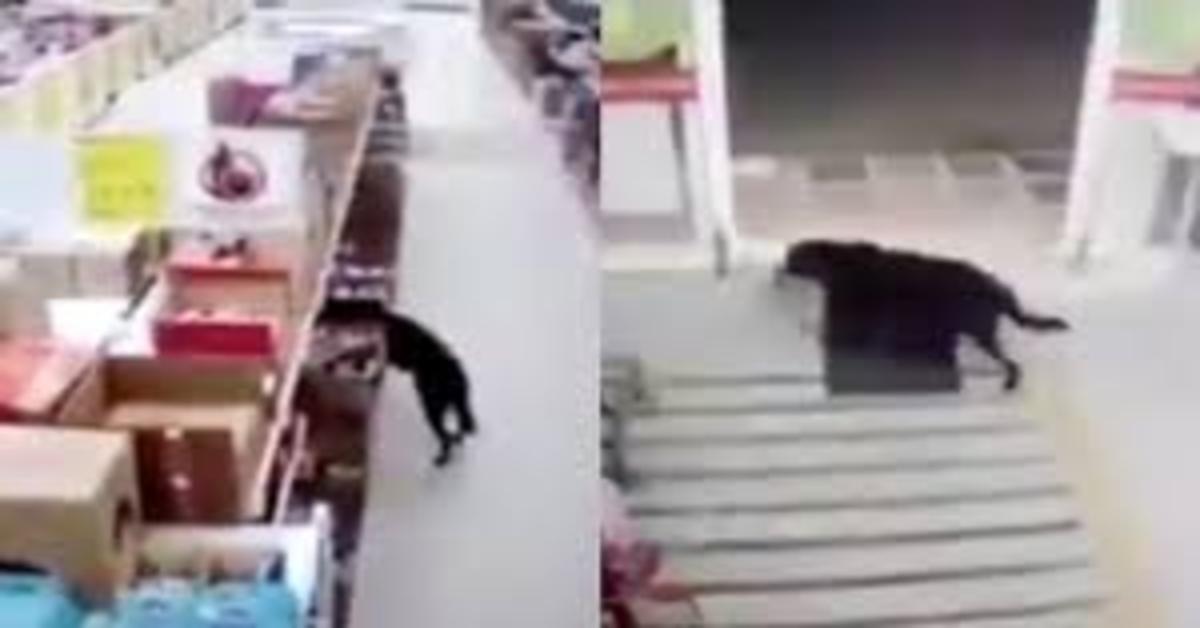 cane ruba al supermercato
