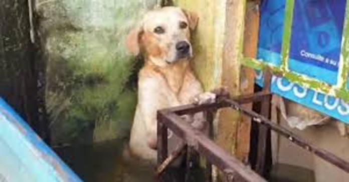cane che sta per affogare durante inondazione