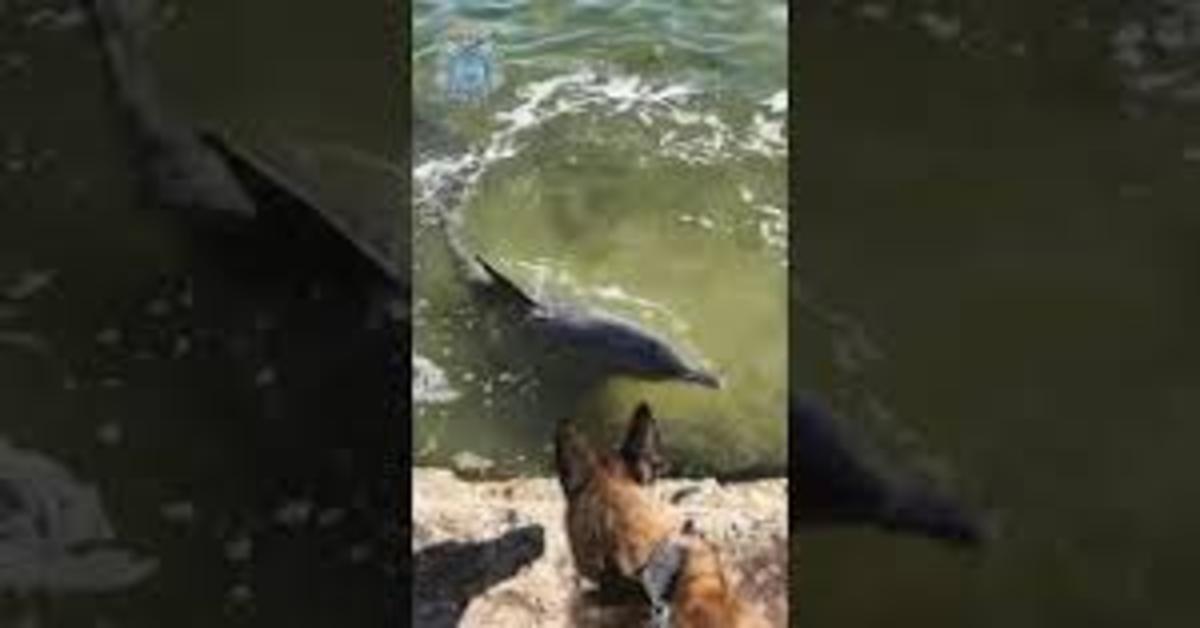 Cane poliziotto fa amicizia con i delfini