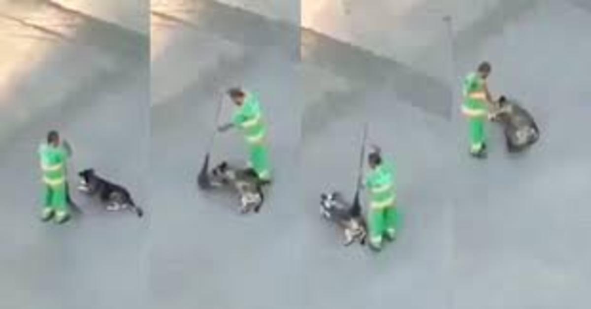 """Un netturbino """"pettina"""" un cucciolo di cane con la scopa e conquista il web (VIDEO)"""
