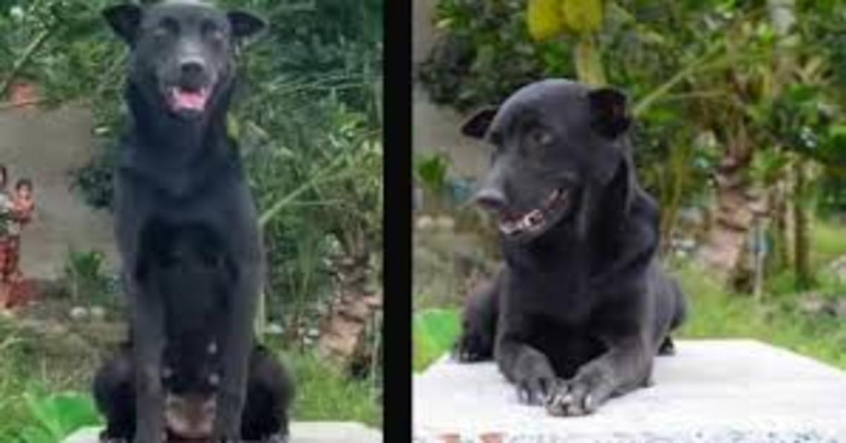 La commovente storia di Mino, una cucciola di cane che da tre anni non si muove dalla tomba del suo fratellino umano (VIDEO)