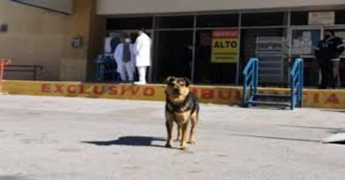 Covito aspetta sul portone dell'ospedale ma il padrone è morto