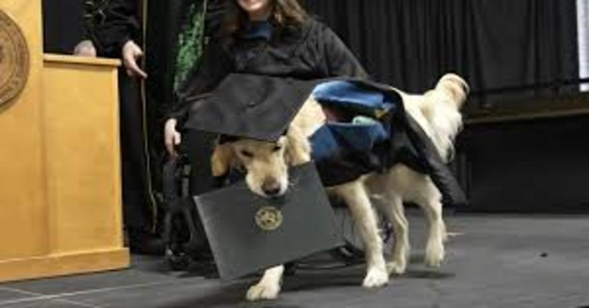 Griffin con diploma in bocca