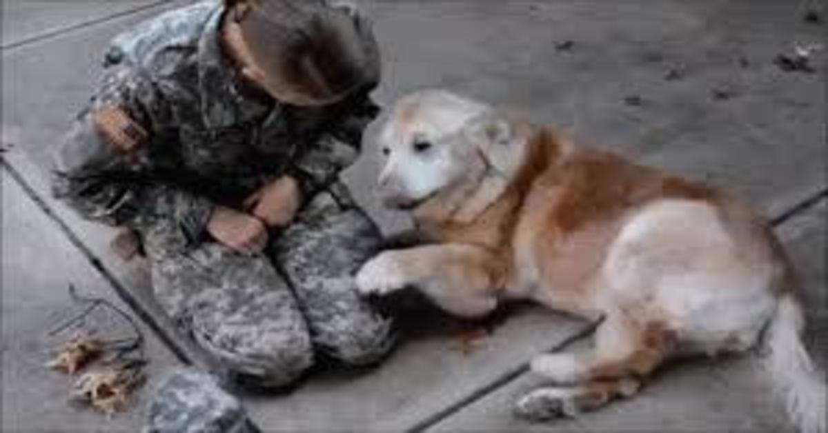 Una soldatessa riabbraccia dopo mesi il suo Golden Retriever Buddy. La felicità del cane è indescrivibile (VIDEO)