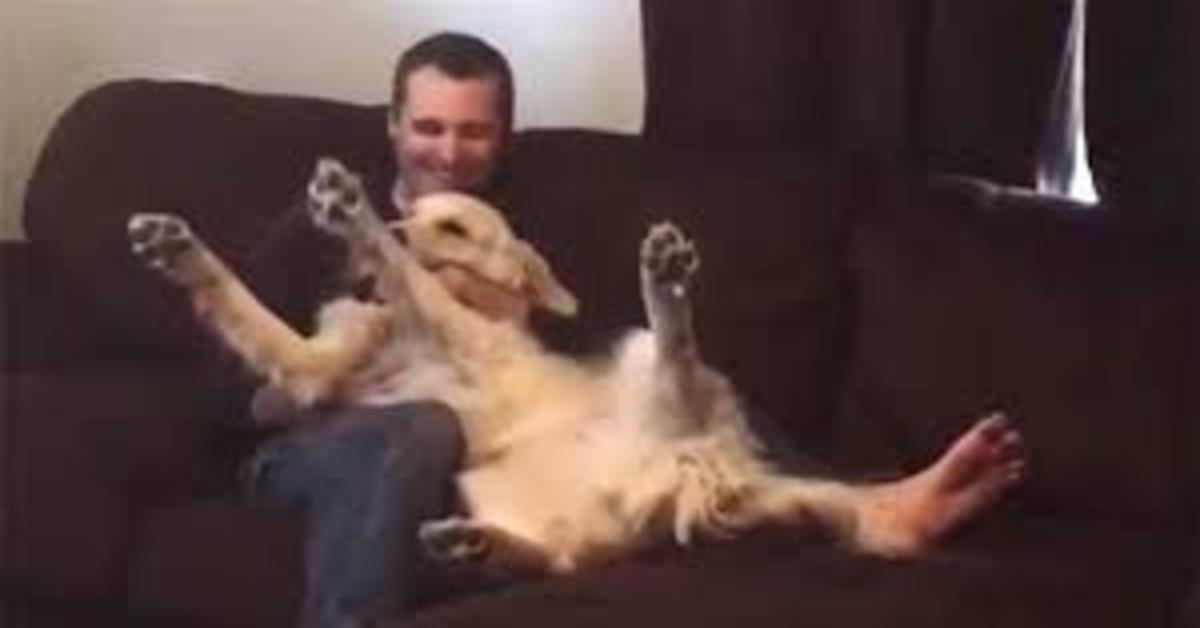 """Il cucciolo di Golden Retriever Watson si fida ciecamente del suo papà umano: si presta senza problemi al gioco della """"fiducia"""" (VIDEO)"""
