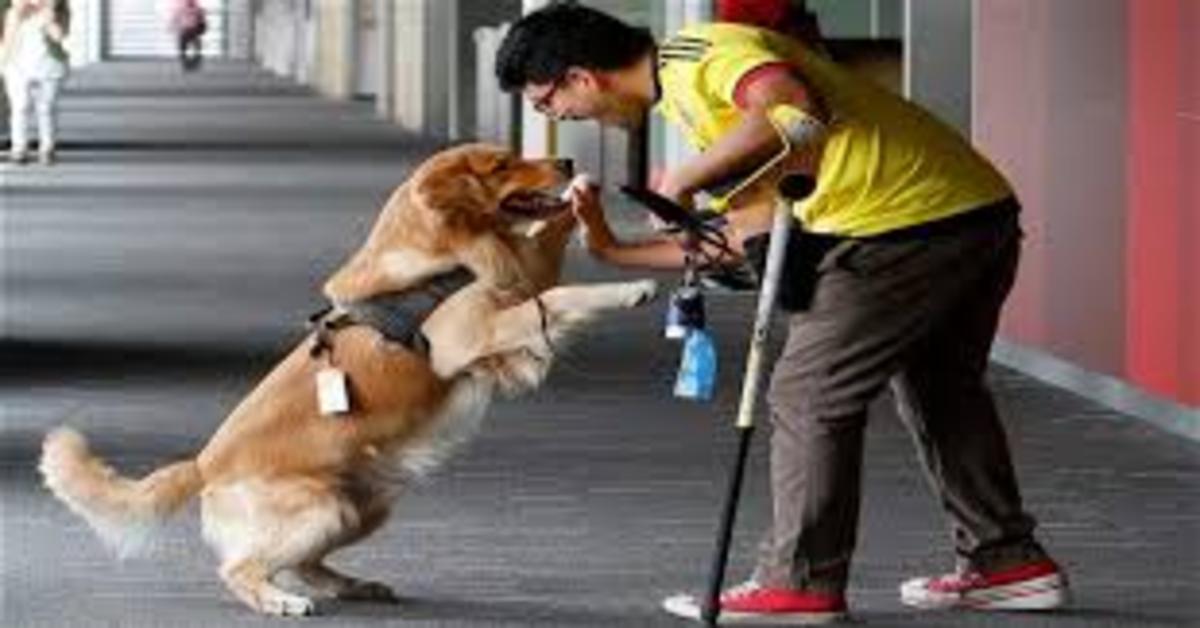Miguel, il cucciolo di Golden Retriever che lavora come assistente del suo padrone in una banca (VIDEO)