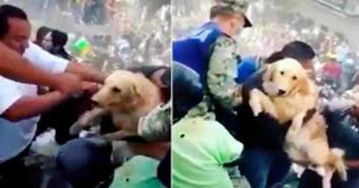 cane salvato durante il terremoto del Messico due foto