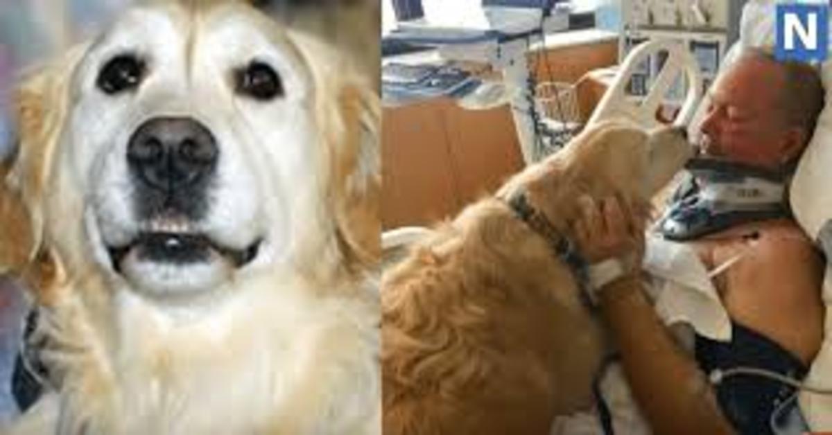Kelsey: la cucciola di Golden Retriever che ha salvato il suo papà umano dal morire assiderato (VIDEO)