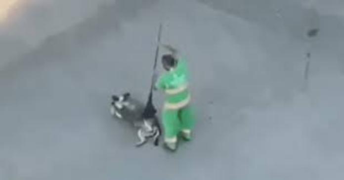 netturbino fa coccole al cane con scopa