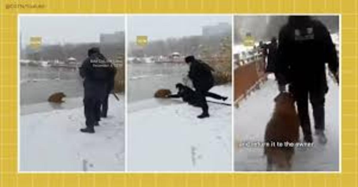 Agenti salvano cane caduto nel lago