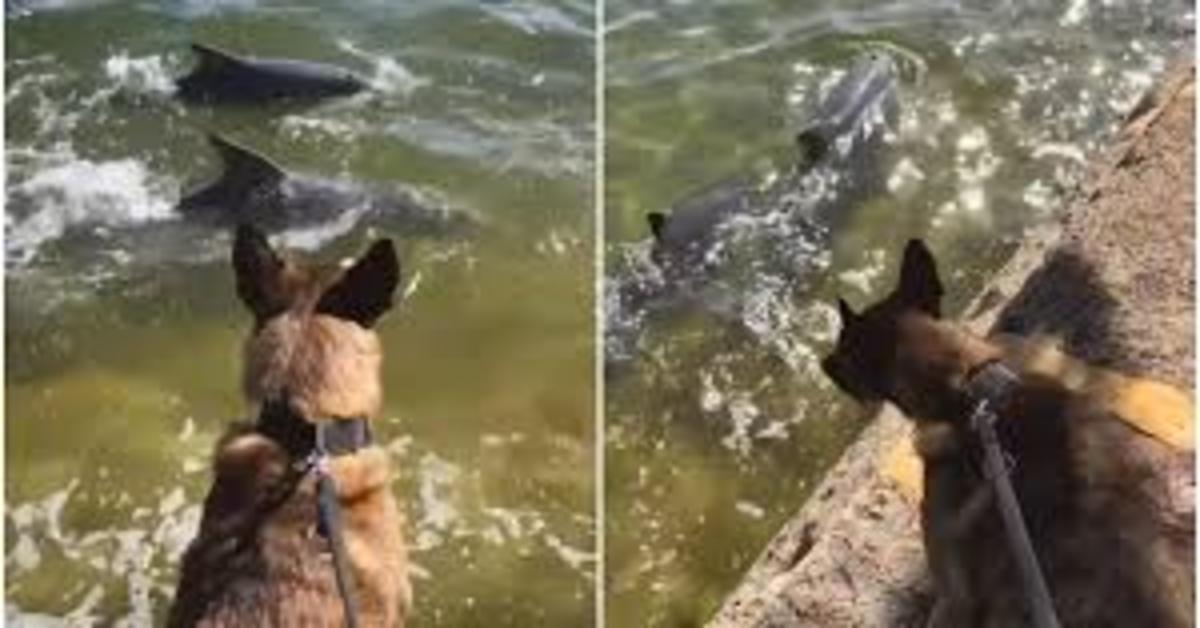 Mako fa amicizia con dei delfini