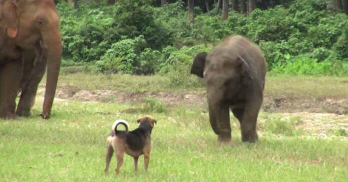 cuccioli elefante incontro
