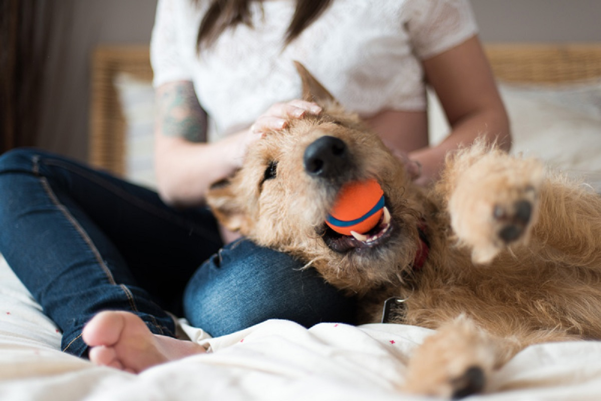 cane stile di vita adatto al vostro