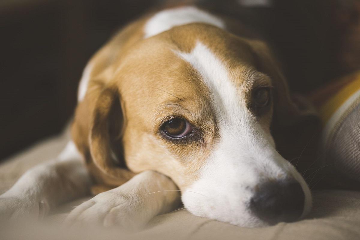 cucciolo cane crisi post vacanze