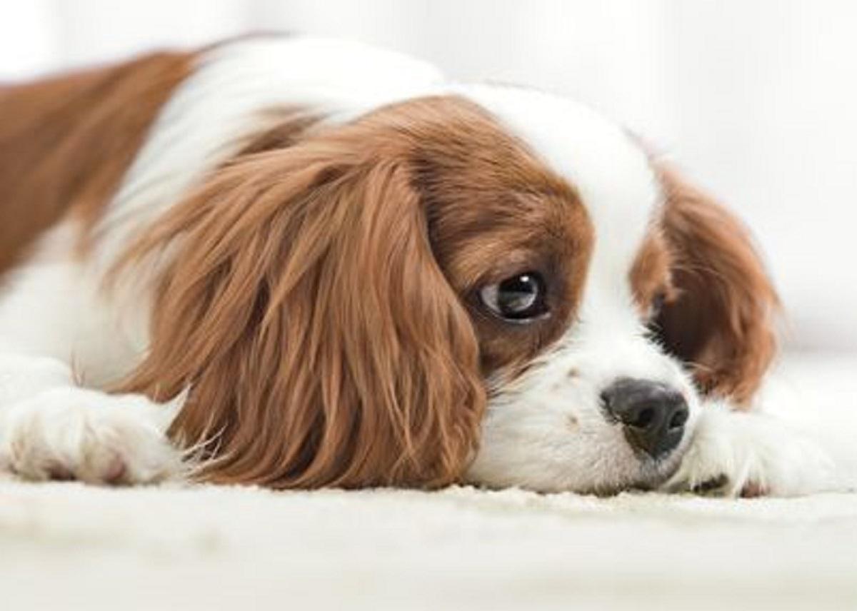 Ecco svelato cosa provano i cani per i loro simili: è davvero sorprendente