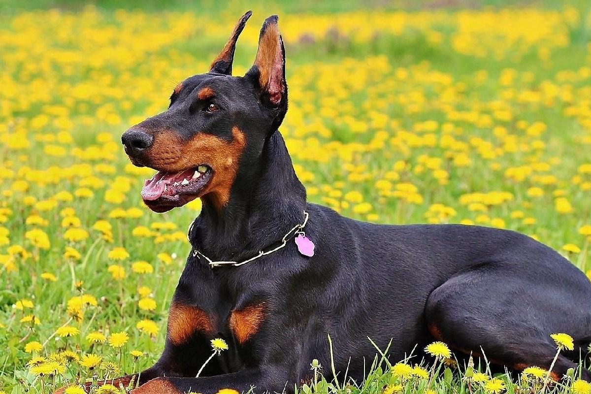 Esistono cani con morsi più potenti? Ecco la verità