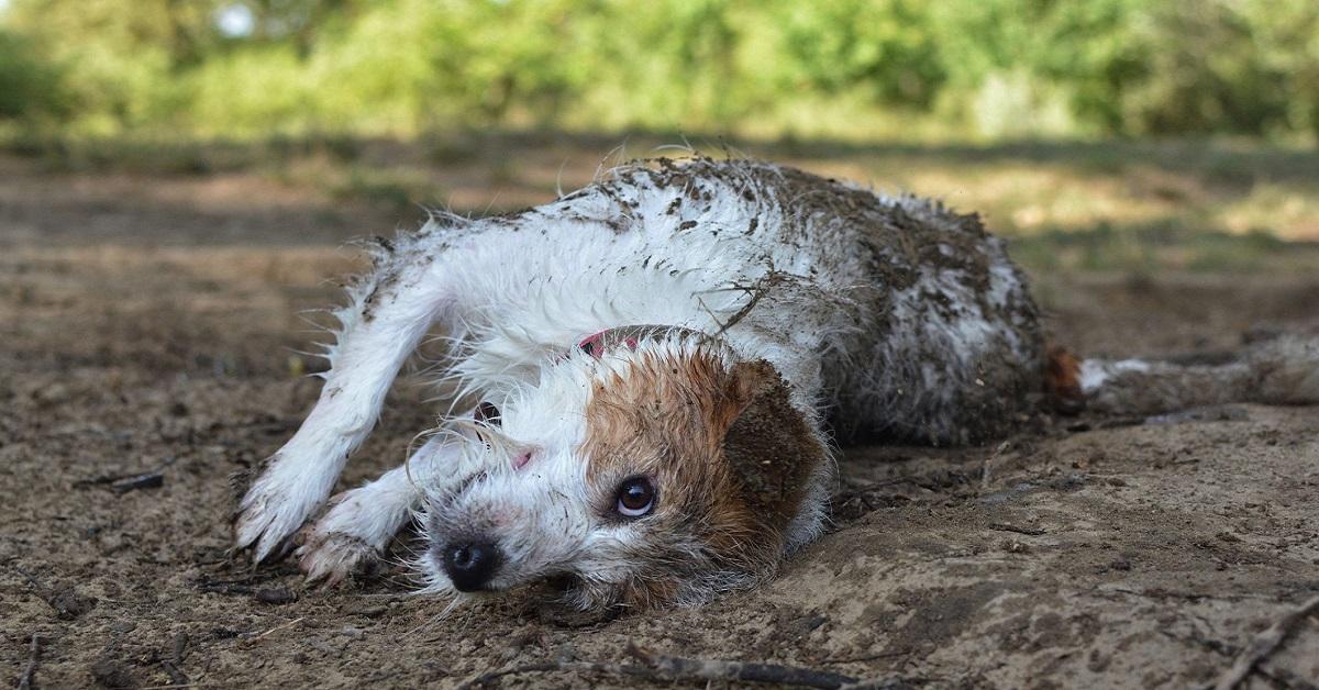cane si rotola nelle pozzanghere
