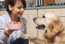 ragazza prepara la pappa al cane